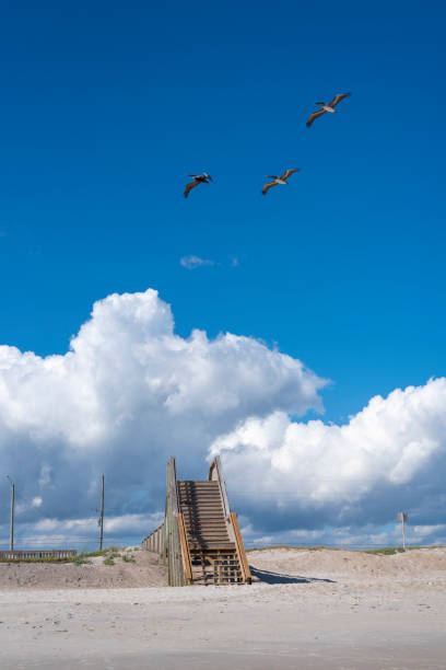 Pelicans Eye View Of Topsail Island From The Surf City: Topsail Island Stock Photos, Pictures & Royalty-Free