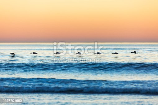 Pelicans Flying at Sunset Over the Ocean at San Onofre Beach
