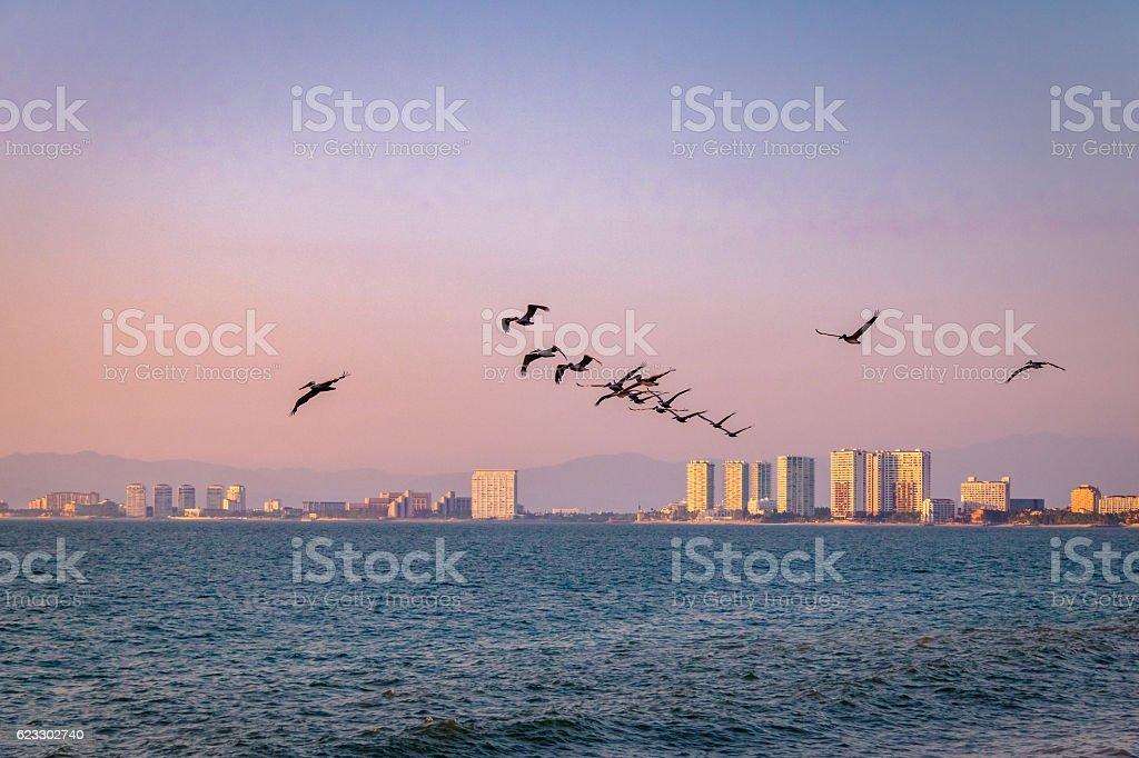 Pelicans flying on the beach - Puerto Vallarta, Jalisco, Mexico stock photo