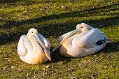 Animals Birds Livestock