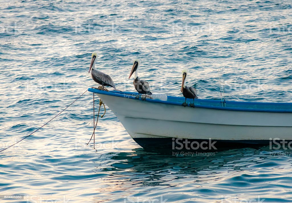 Pelicans on a boat - Puerto Vallarta, Jalisco, Mexico stock photo