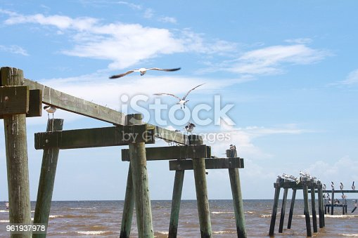 istock Pelicans taking off from Wrecked Pier in Gulf of Mexico 961937978