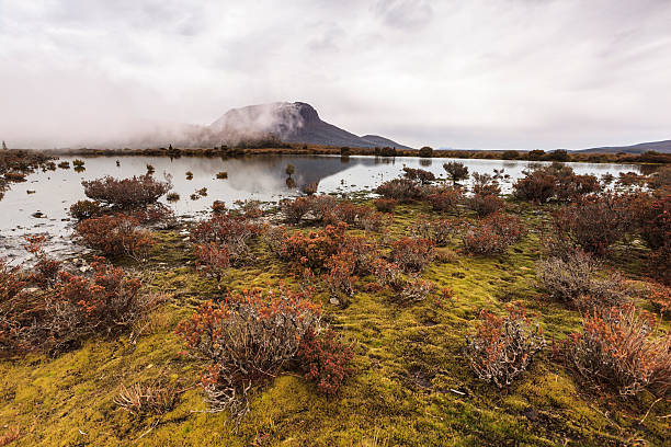 pelion west - cradle mountain stock photos and pictures