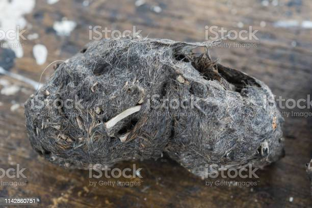 Pellet and droppings of a barn owl picture id1142860751?b=1&k=6&m=1142860751&s=612x612&h=bt5cbrvcvbvd5i rmjvrequdgp2gjnaacqhvbx2mov4=