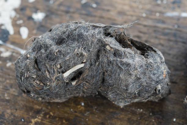 Pellet und Tropfen einer Scheune Eule – Foto