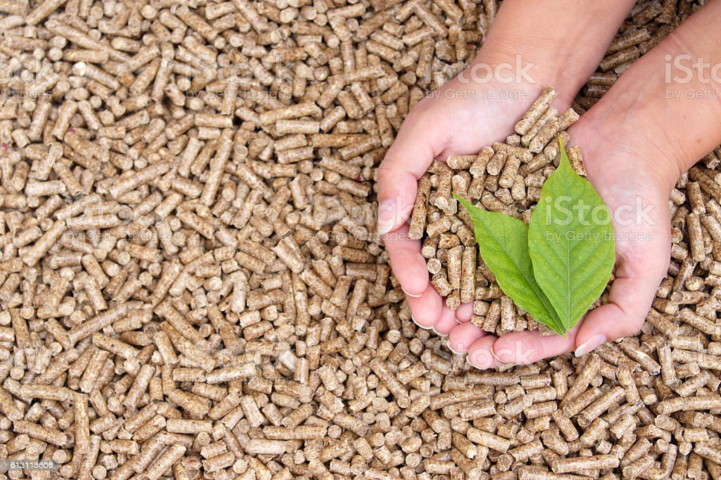 Pellets in hand and green leaf stock photo