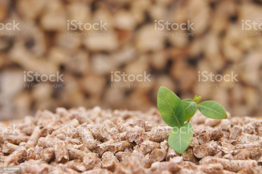Pellets with green leaf stock photo