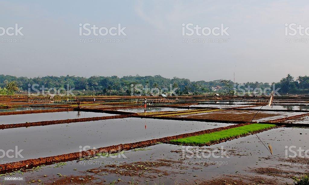 Pematang Sawah stock photo