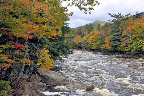 Pemigewasset River, New Hampshire Autumn in White Mountains of New Hampshire. Swift-flowing Pemigewasset River with rapids, distant mountain, and colorful foliage along river banks. white mountain national forest stock pictures, royalty-free photos & images