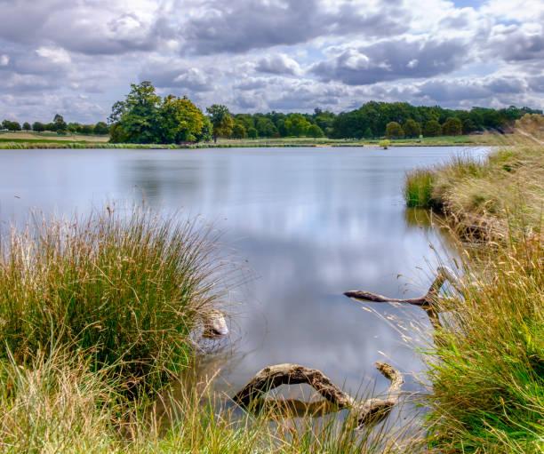 pen pond - richmond park stock photos and pictures