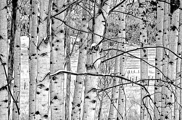 Potlood Zwart-Wit Illustratie van de Kale Takken van de Populier van de winter foto