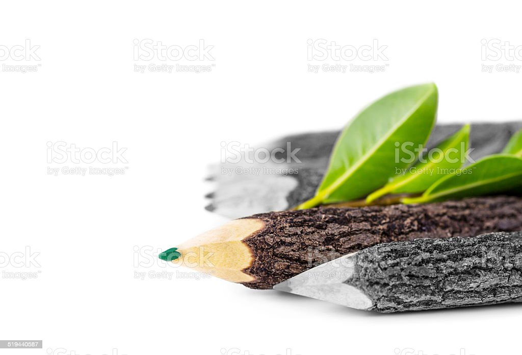 Pencil branches on white background stock photo