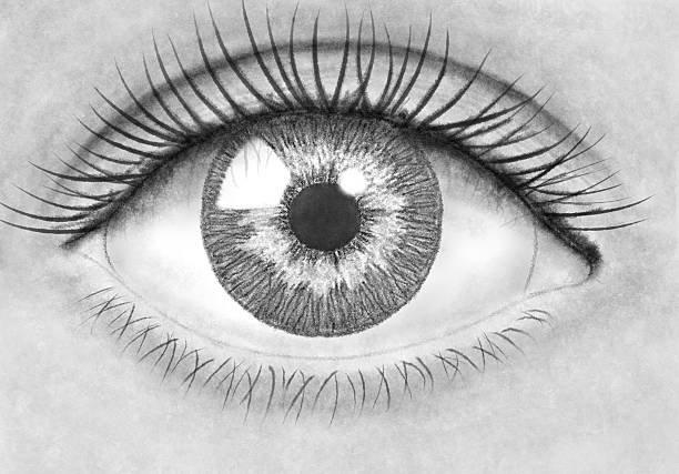 pencil drawing eye - pencil drawing stock pictures, royalty-free photos & images