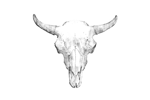 istock Pencil drawing of a bull's head on a light background 1161317489