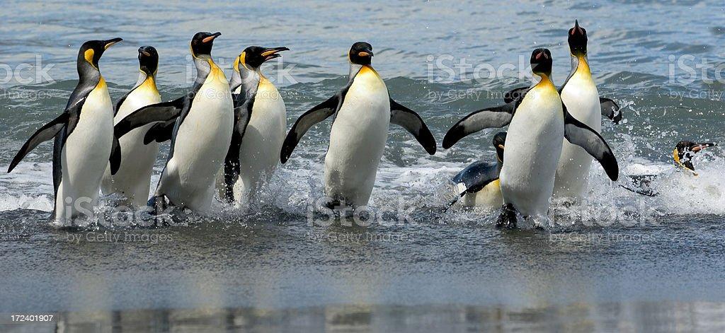 Penguin 18-17 stock photo