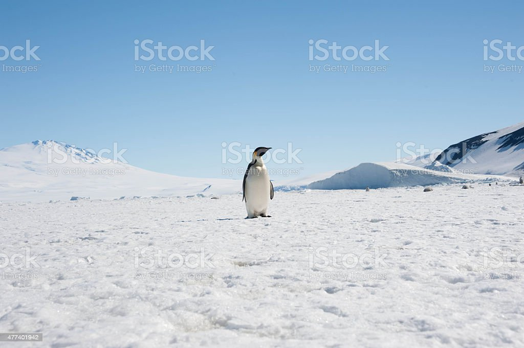 Penguin and Volcano stock photo