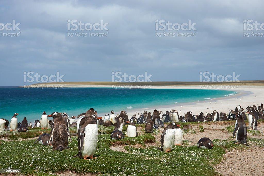 Penguin Beach stock photo