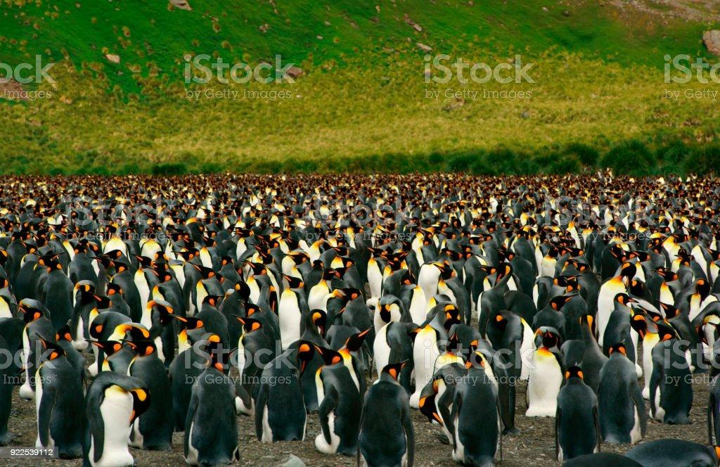 Penguin Colony Overview stock photo
