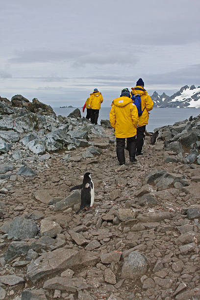 Penguin Following Antarctica Tourists stock photo