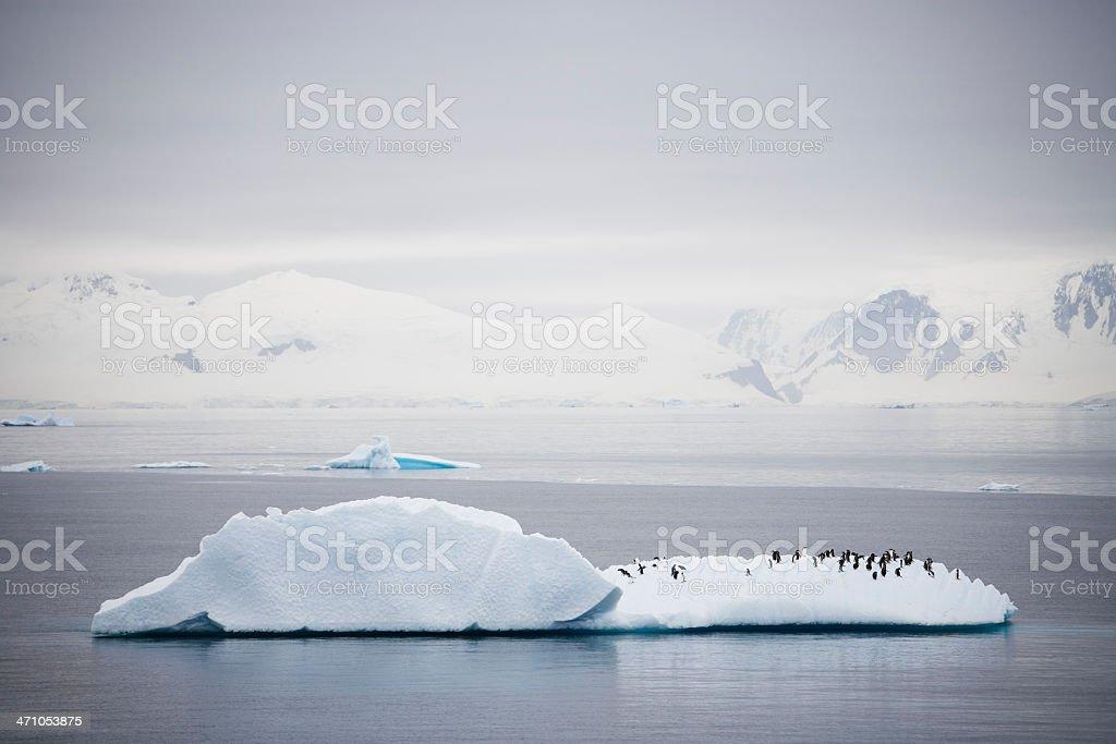Penguin Iceberg royalty-free stock photo