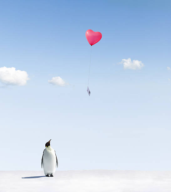 Penguin looking at letter attached in a heart-shaped balloon stock photo