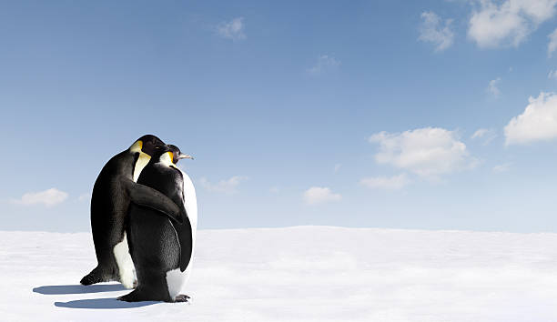 Penguin Love stock photo