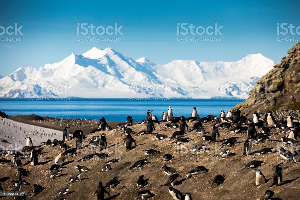 Penguin Nests of Bailey Head stock photo