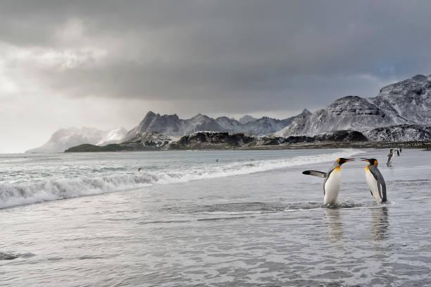 penguin paradise stock photo