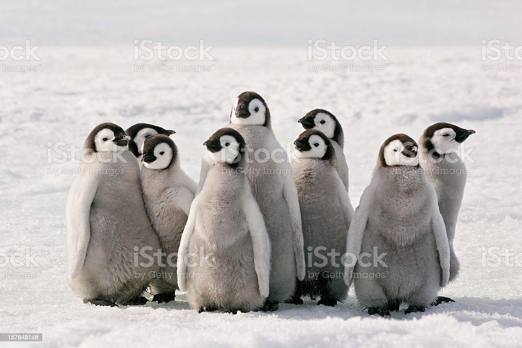 Penguin Party stock photo