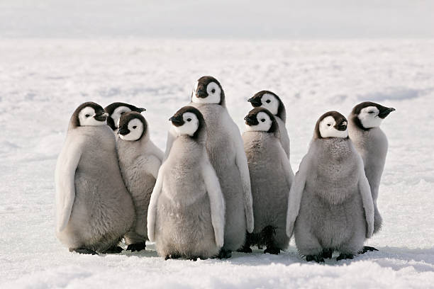 Penguin Party stock photo
