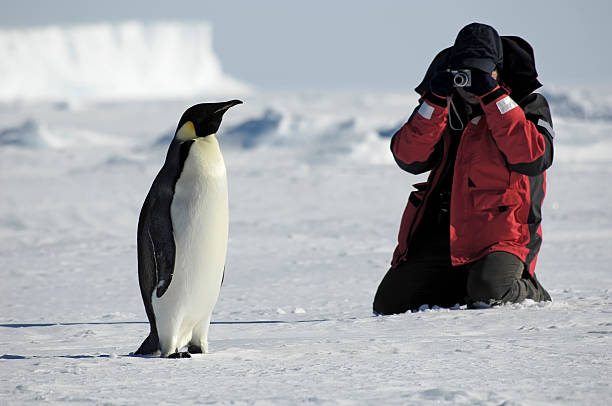 Pingüino de fotos - foto de stock