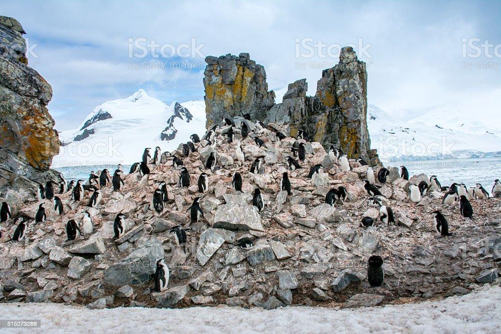 Penguin Pyramid stock photo