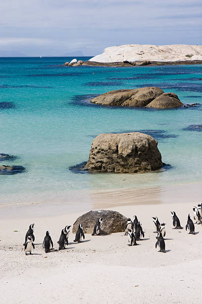 Penguin Sanctuary stock photo