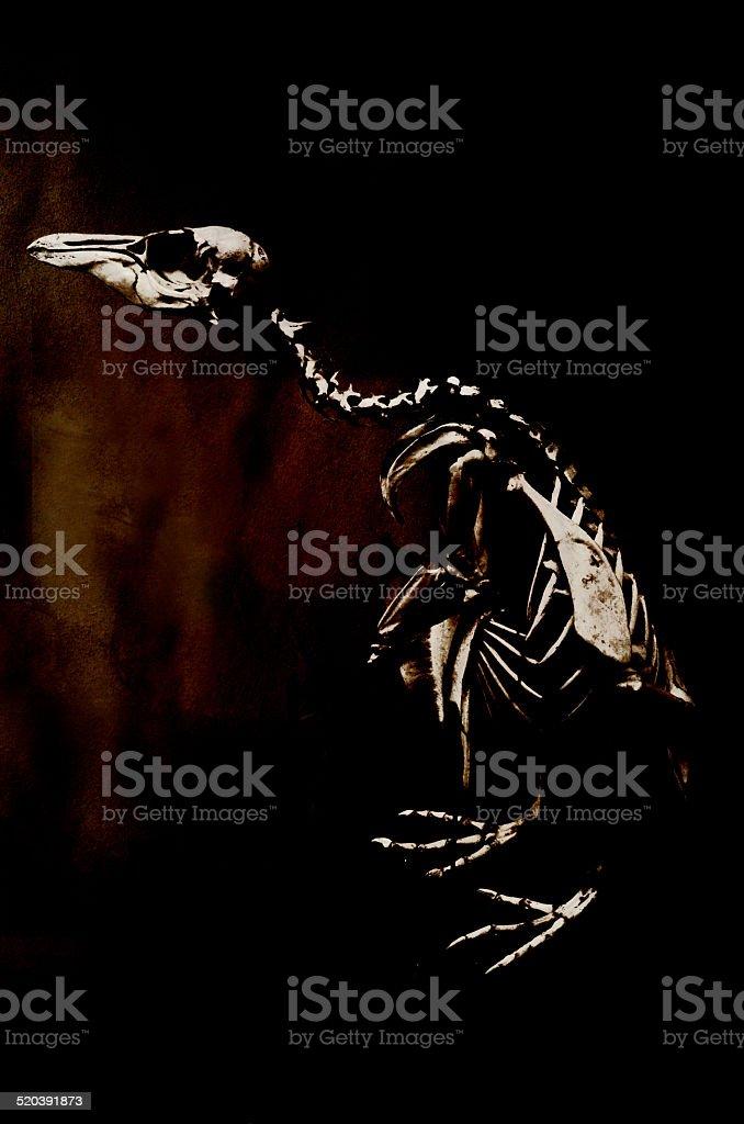 penguin skeleton stock photo