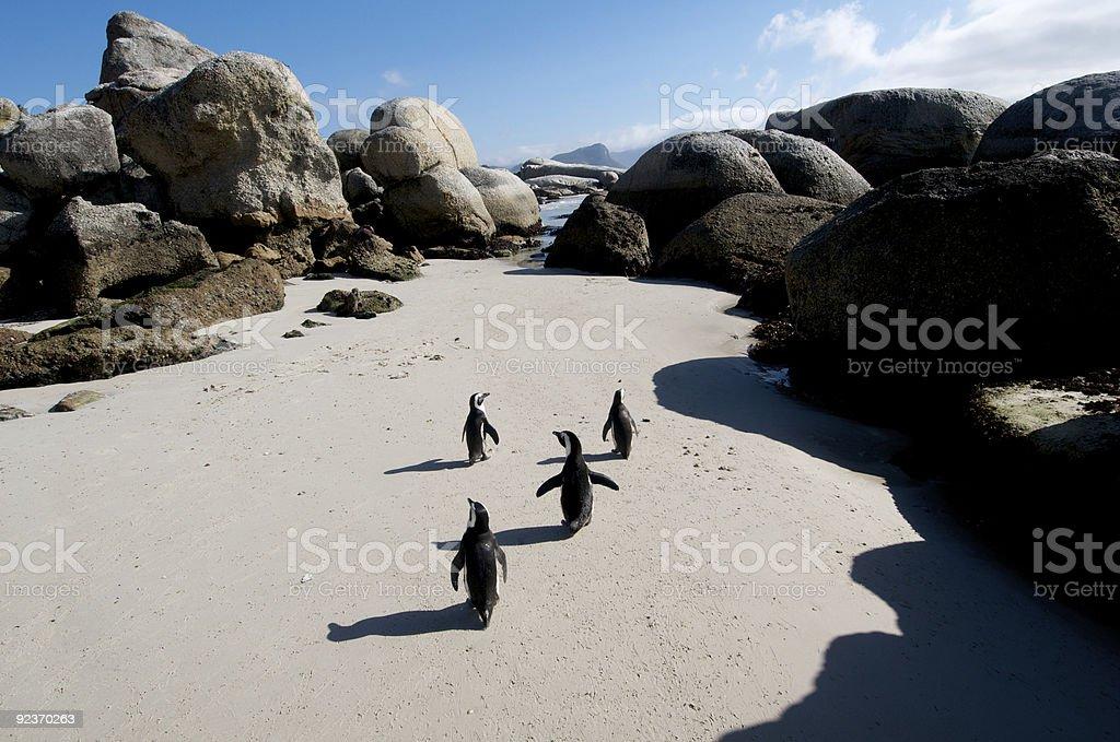 Penguin Stroll royalty-free stock photo
