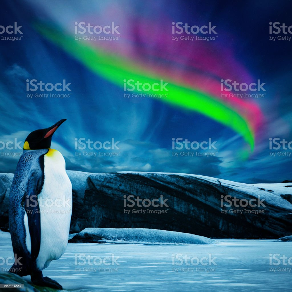 Penguin Under Southern Lights stock photo