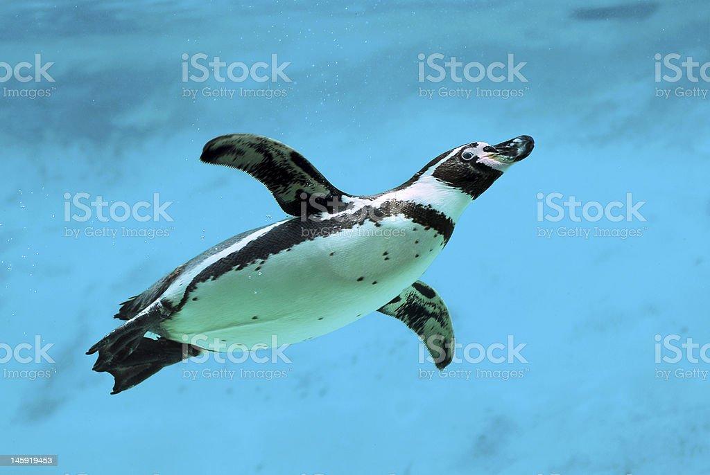 Penguin unter Wasser - Lizenzfrei Amerikanische Kontinente und Regionen Stock-Foto