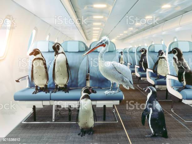 Penguins and pelican in the airplane cabin picture id921538512?b=1&k=6&m=921538512&s=612x612&h=7hyoi1krrbkemmzwnubcgzq94rzgrx 7bquc9tyb a0=
