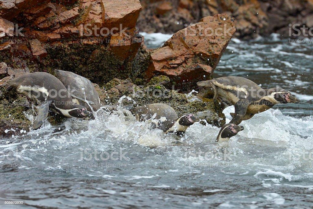 Penguins, Ballestas islands, Peru stock photo