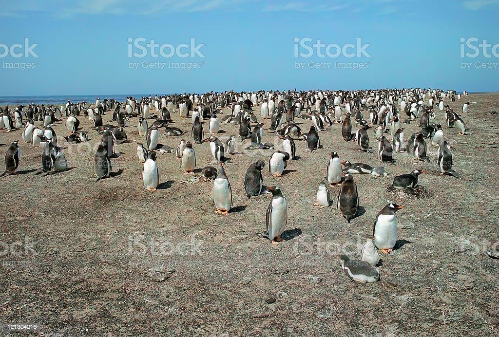 Penguins colony royalty-free stock photo