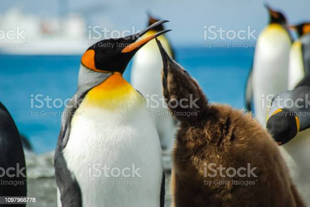Penguins in antarctica picture id1097966778?b=1&k=6&m=1097966778&s=612x612&h=tpknazfm6ox9cx8mhfvuxaeclhe5zle znr9g94vl5a=