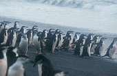 Penguins in Antarctica, waterfowl penguin in nature.