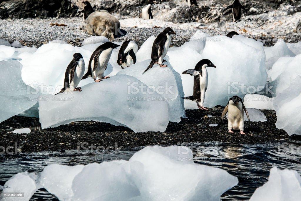 Penguins in Antartica stock photo