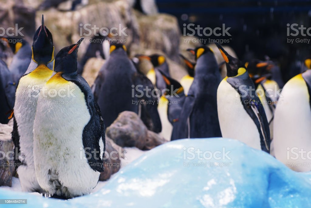 pinguins no zoológico. - foto de acervo