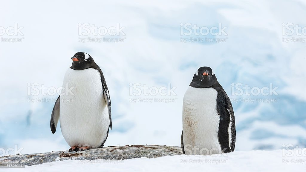 Penguins of Antarctica royalty-free stock photo