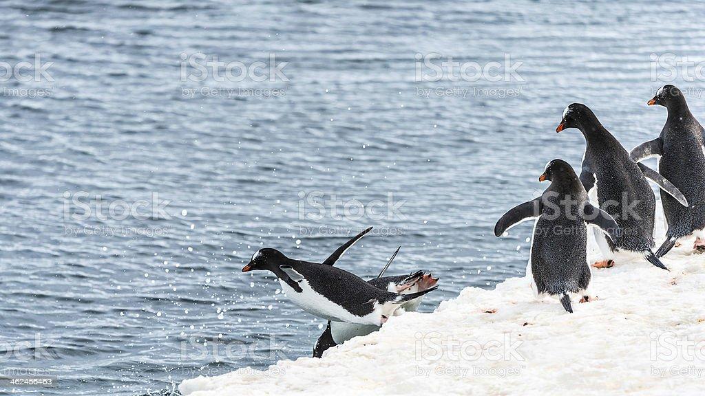 Penguins of Antarctica royalty-free stock photo