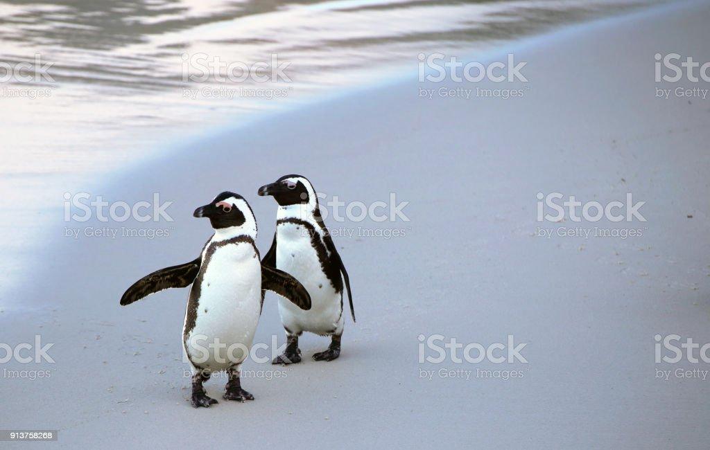 Penguins on a beach stock photo