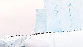 Cute penguin icon in flat style. Cold winter symbol. Antarctic bird, animal illustration.