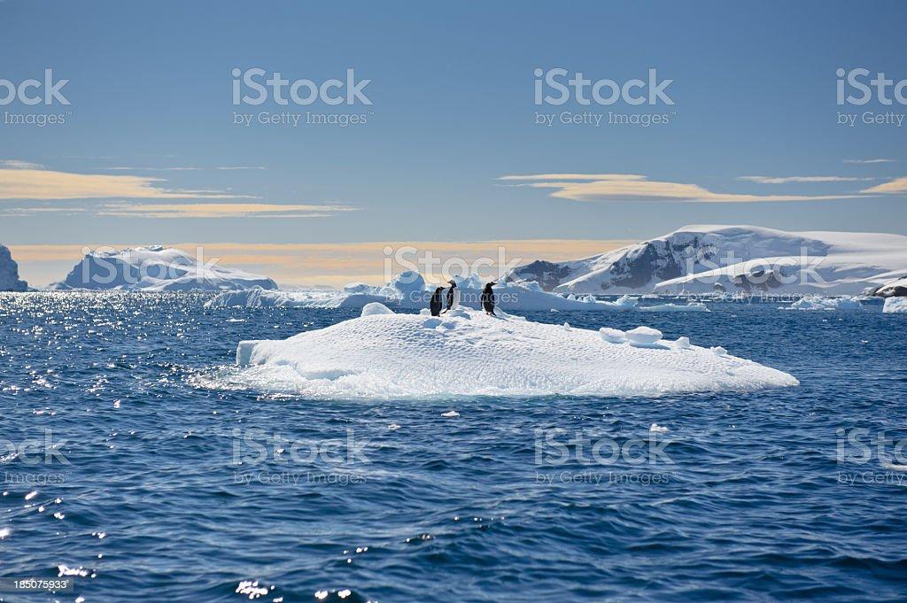Penguins on an iceberg stock photo