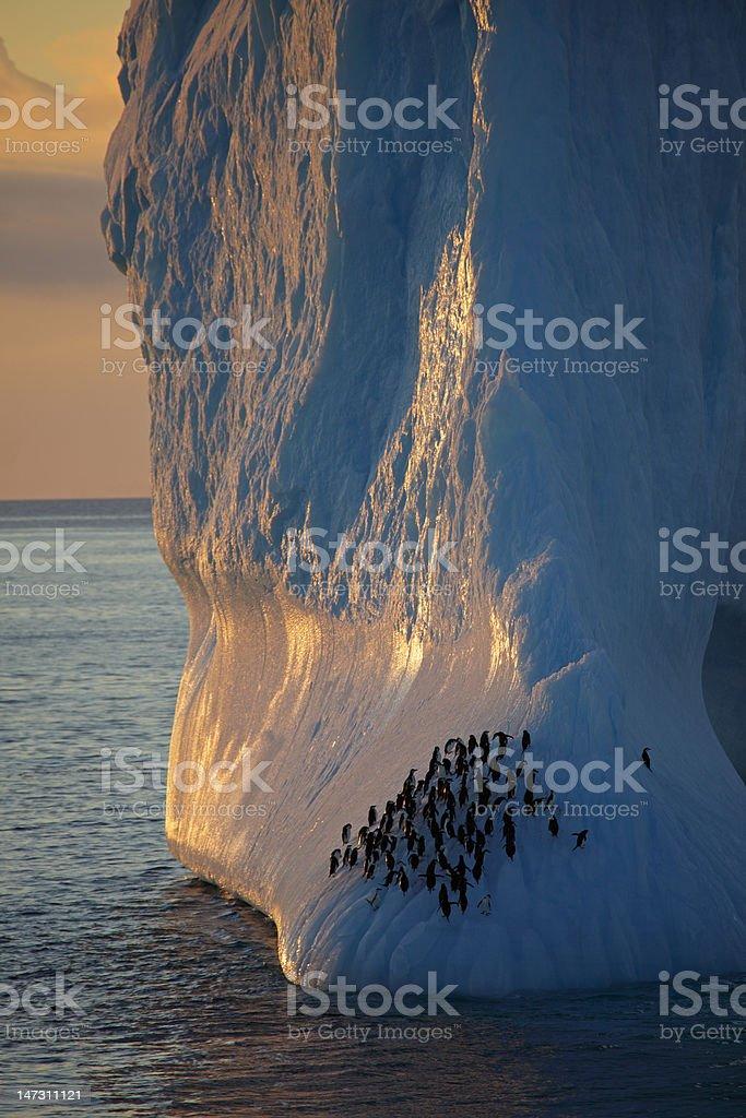 Penguins on Antarctic iceberg at sunset stock photo